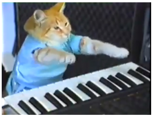 Refresh your brain with a funny cat video